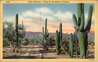giant-sahuaros-a-road-on-the-desert-in-arizona-cactus-desert-plants-original-vintage-postcard_9166216