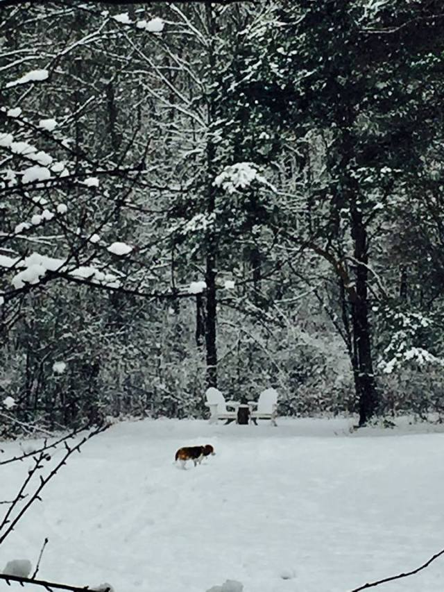 beagles-morning