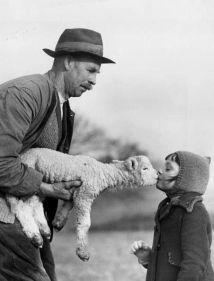 man lamb